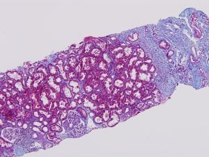 High-quality stained tissue sections produced by the histology core service